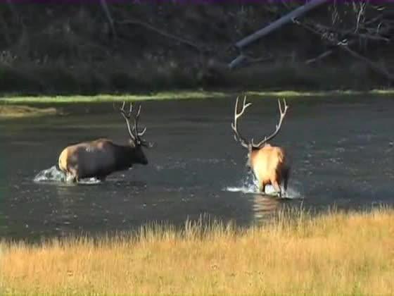Hunting the Elk Rut: Can We Predict It?